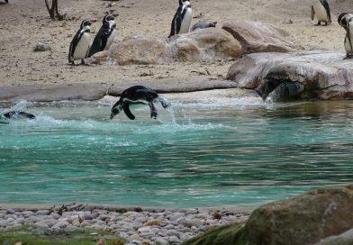 Ein königlich-britischer Zoo