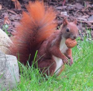 Hörnchen2