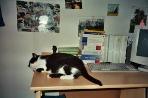 Rocky Schreibtisch